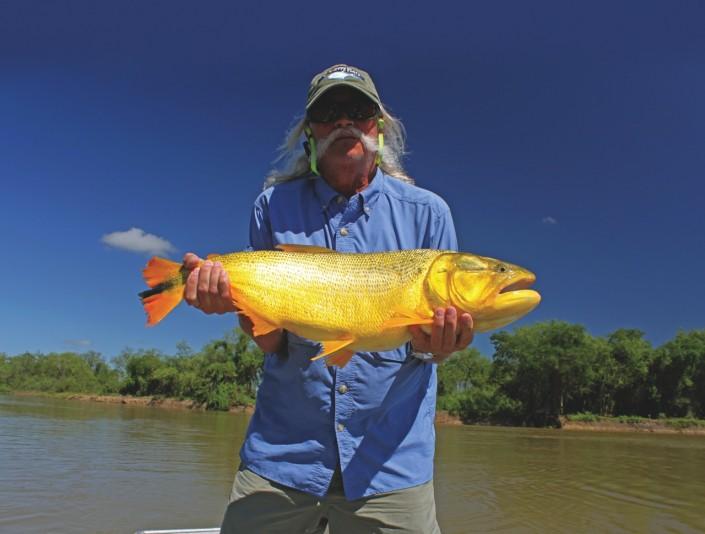 Golden dorado corrientes argentina fishabout fishing for Golden dorado fish
