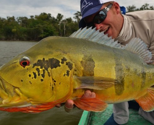 Big-Amazon Peack-bass-on-fly.jpg
