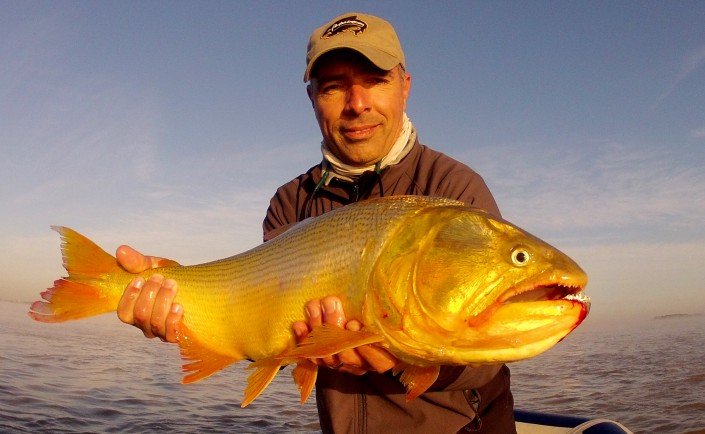 Golden Dorado River Cruiser!