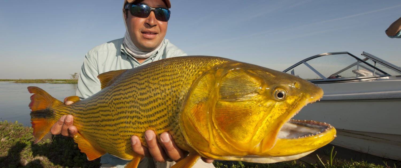 Golden dorado river cruiser fishabout fishing outfitters for Golden dorado fish
